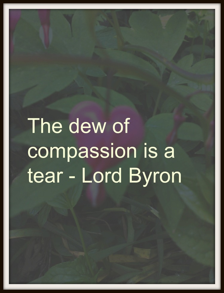 dew of compassion